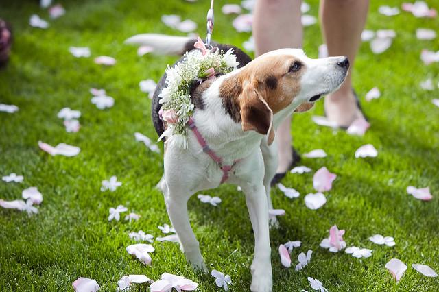 dog-wedding