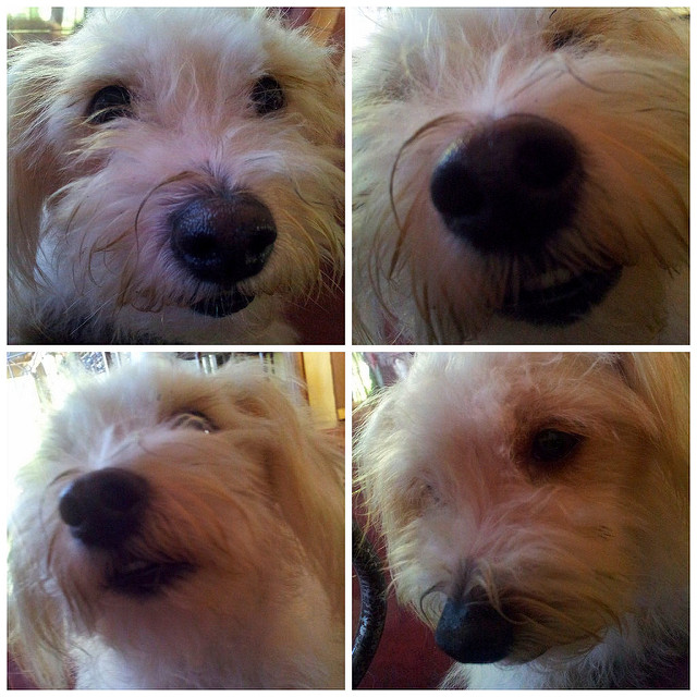 Dog Selfies – Crazy or Brilliant?