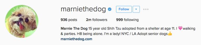 marniethedog instagram