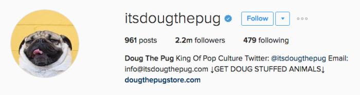 itsdougthepug instagram