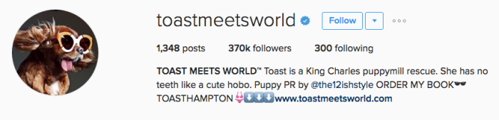toastmeetsworld instagram