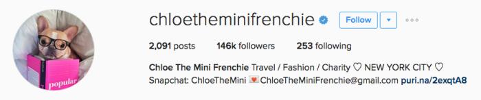 chloetheminifrenchie instagram