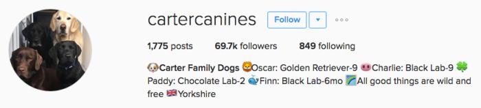 cartercanines instagram