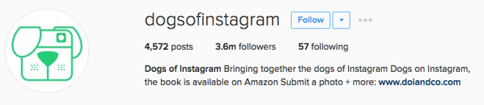 dogsofinstagram instagram